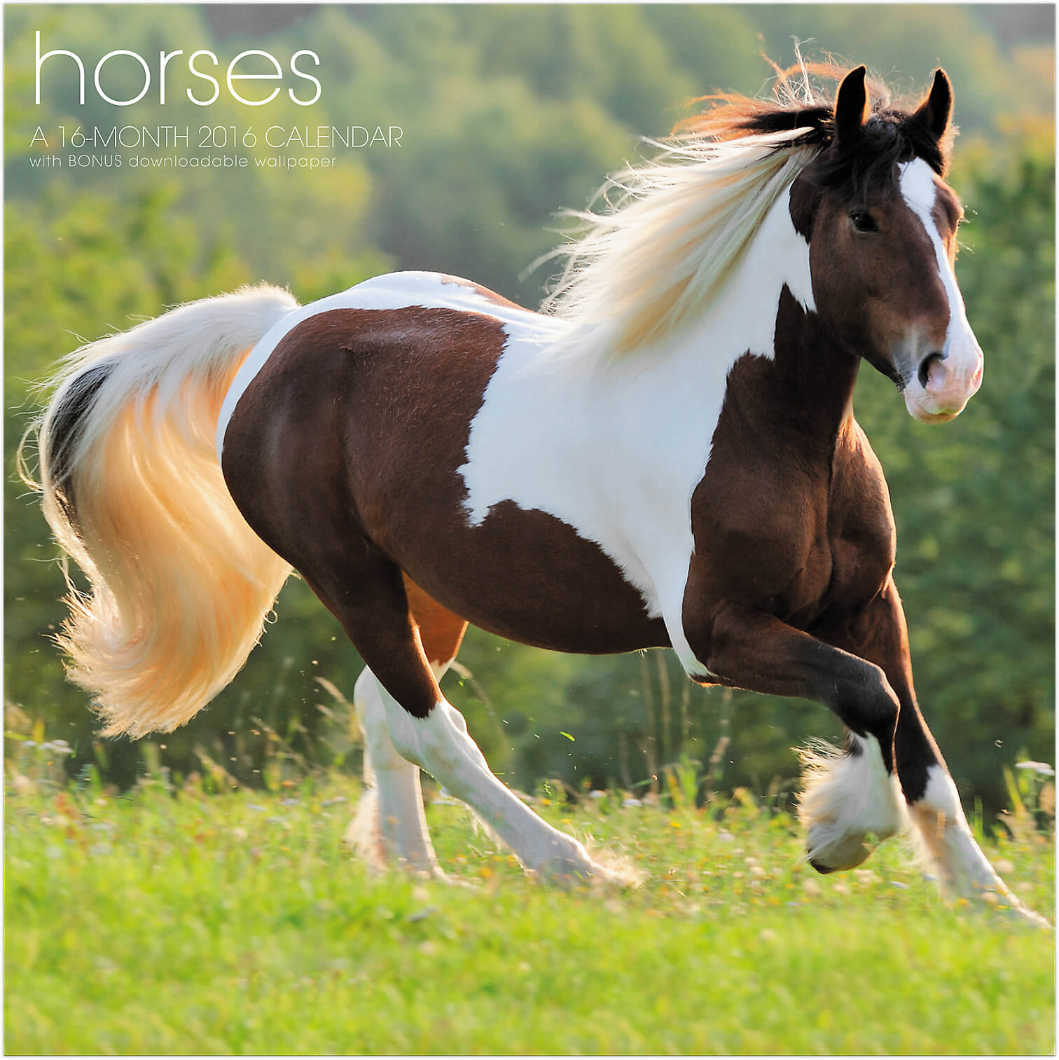 A Range of Horse Addles in Innumerable Hues Perfect For Horse Riding