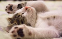 Did You Know All These Facts About Cats?