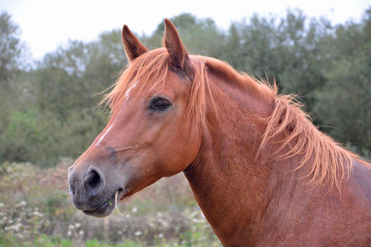 Equine Sports Massage - Relaxes