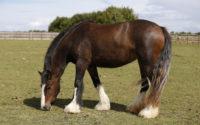 How Equine Massage Helps