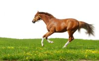 How to Buy Horse Halters or Leads?