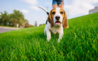 How to Shop For Pet Products Online?