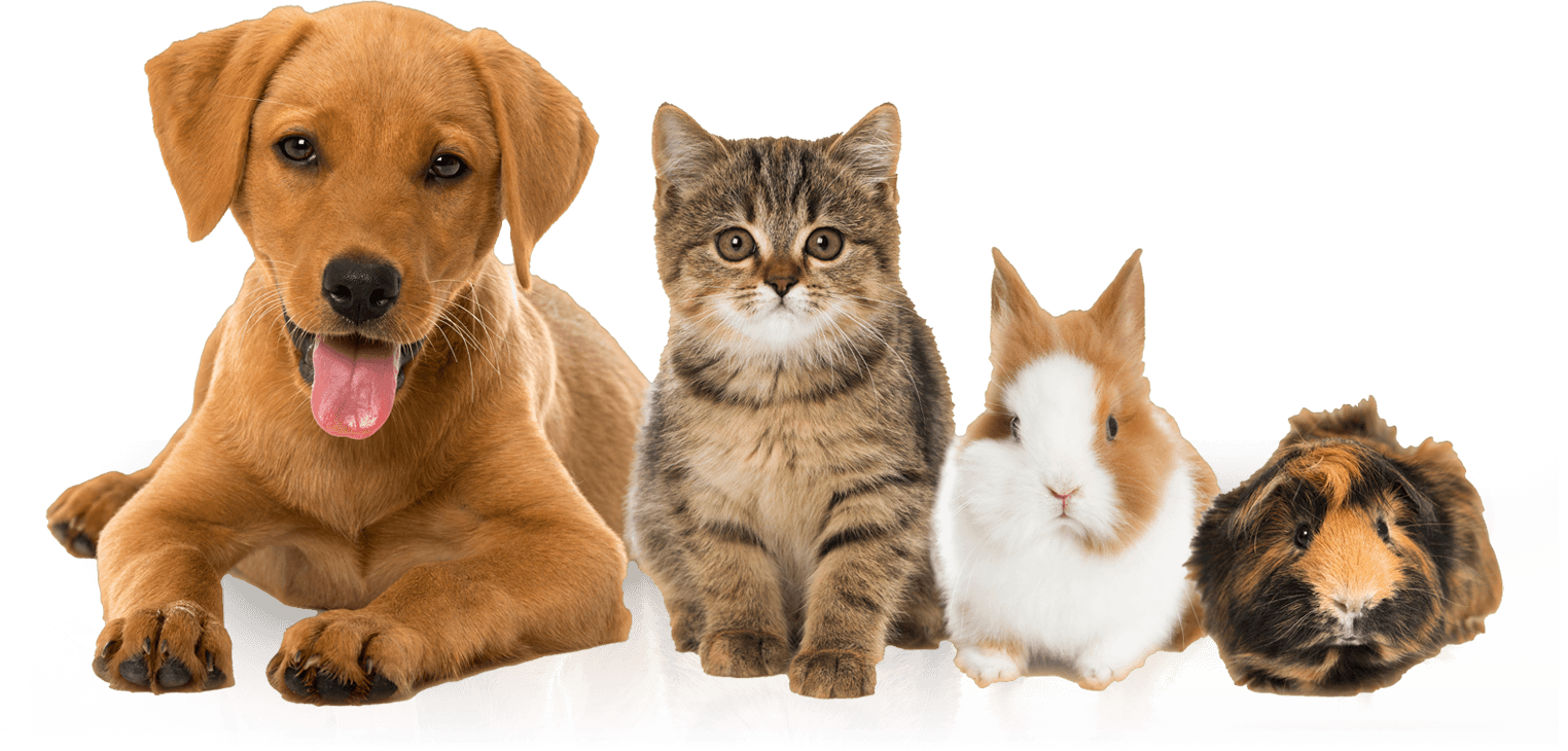 Interesting Facts About Animal Communication