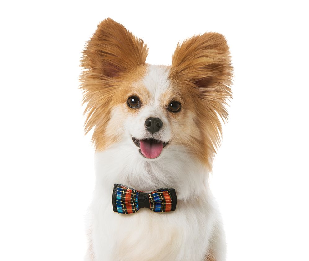 Provide Your Dog Good Health And Happiness With Tasty Foods