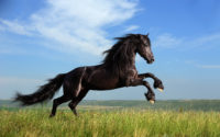 Safety Tips to Follow While Riding Vacation Horses