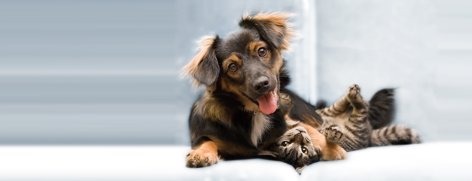 Tips - How to Care Your Loved Pets During This Summer