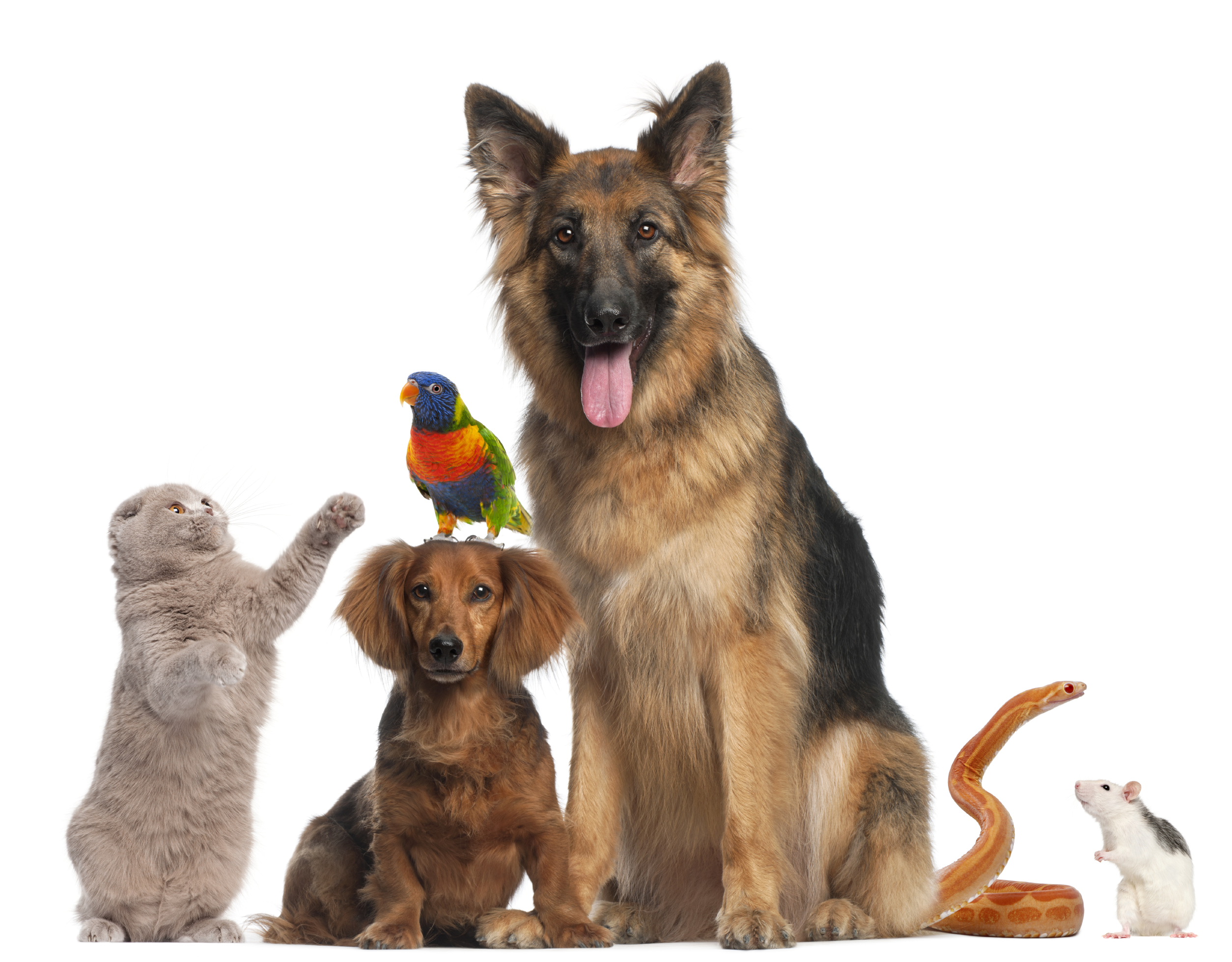 What is The Best Way For Choosing Food Bowl For my Pet