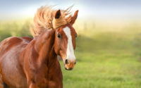 What to Carry For Horse Riding Tour