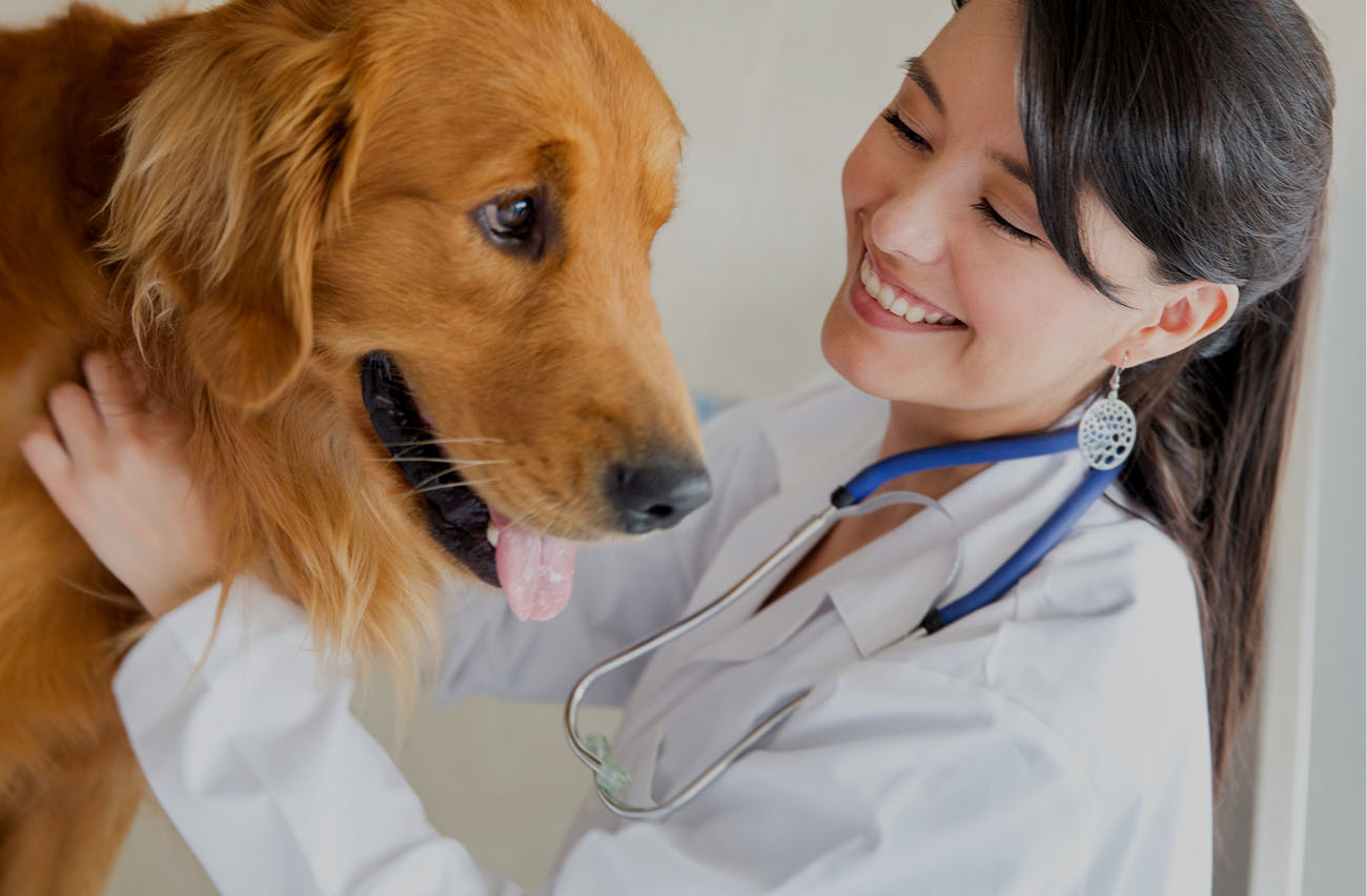 Why Veterinary Stem Cell Therapy Offers New Hope